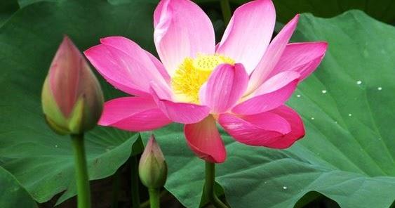 Blog hướng thiện được vui: Chia sẻ kinh nghiệm tìm hiểu và tu tập về Phật pháp cơ bản