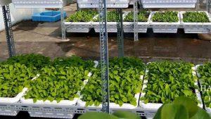 Một số mô hình trồng rau sạch đẹp mê hồn bằng giá kệ sắt V lỗ | Giá kệ sắt