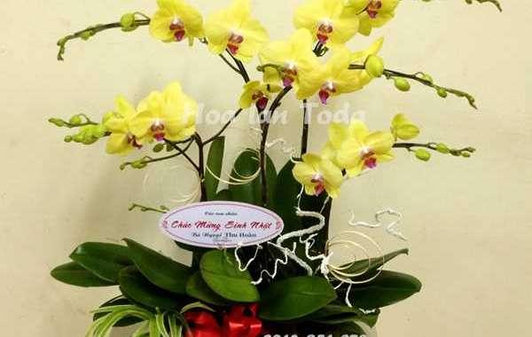 999+Mẫu hoa tặng cho mẹ ngày sinh nhật ý nghĩa
