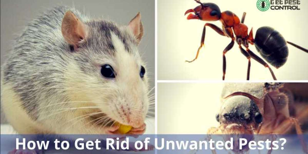 How to Get Rid of Unwanted Pests?