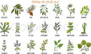 Cây thuốc trong thiên nhiên
